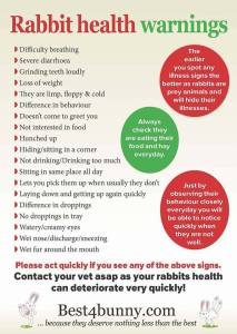 rabbit health warnings